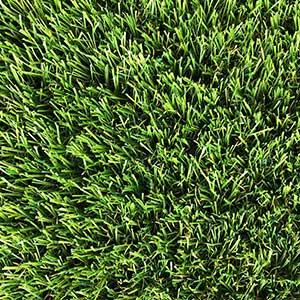 Ludlow grass
